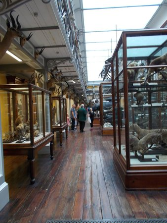National Museum of Ireland - Natural History : primo piano