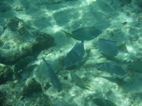 Grand Bahia Principe Coba : dans la mer