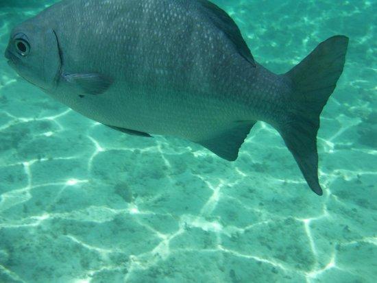 Grand Bahia Principe Coba : poissons dans la mer