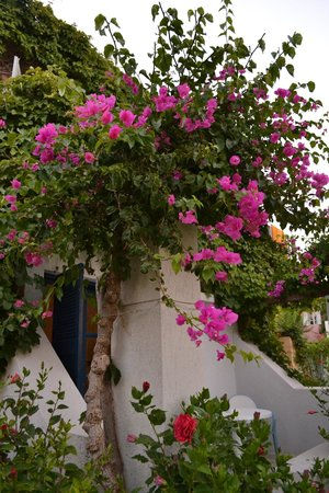 Zorbas Village and Aqua Park: fiori