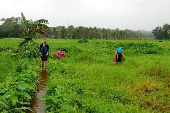 Yogalife Homestay: Rice fields