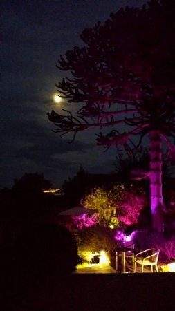 Norwegian Wood Organic Bed and Breakfast: Moonlight in the garden :)