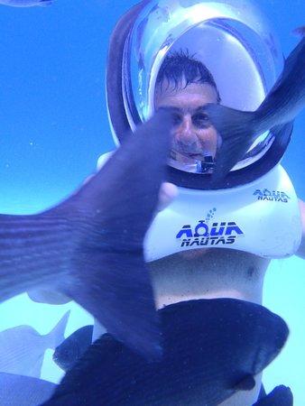 Aquanautas : peces