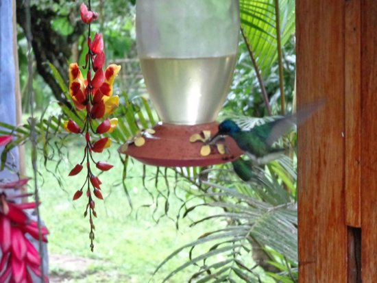 El Abrazo del Arbol: The humming bird feeder outside the dinning room