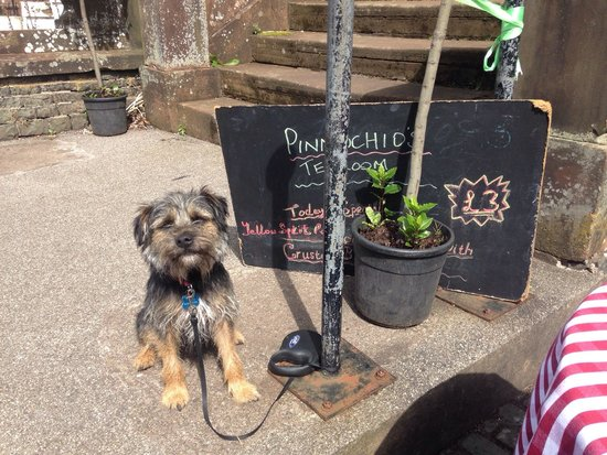Pinnochios Tearoom: Walter the pooch was made most welcome at Pinnochios, who moved tables outside for us to dine wi
