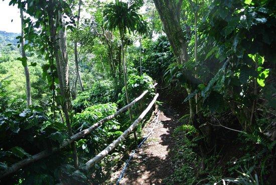 El Toledo Coffee Tour: the trail through the plantation