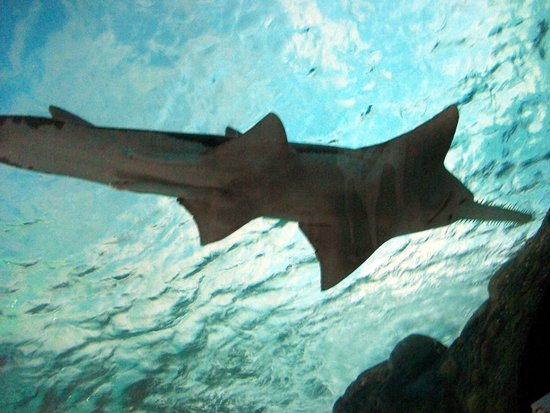 Ripley's Aquarium : sawfishphoto with filter, please check filter.