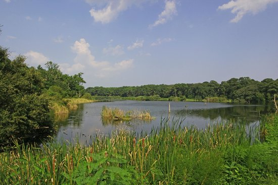 Harris Neck National Wildlife Refuge : Main Pond