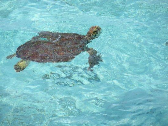 Lankayan Island Dive Resort: Dal pontile