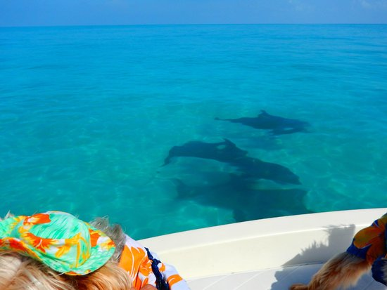 Take Me There Charters: The dolphin playground.