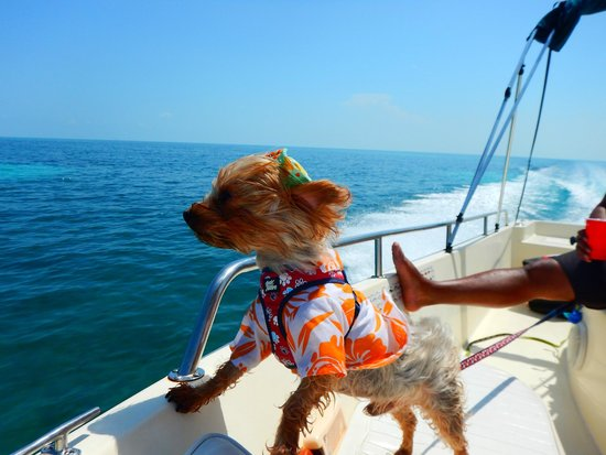 Take Me There Charters: Our dog Capone enjoying the wind in his hair and the smell of the ocean.