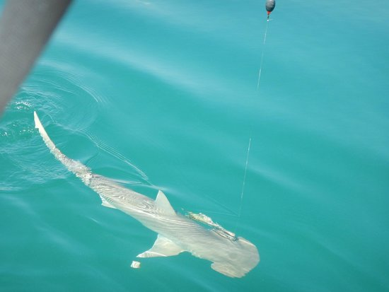 Take Me There Charters: We caught a shark!
