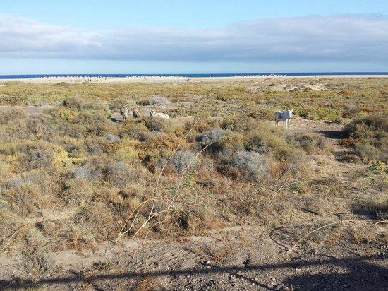 Barcelo Jandia Playa: La partie végétale de la plage avec ses ânes
