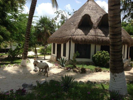 Kabah-na Eco Resort: eco cabanas