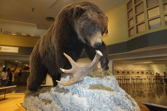Buffalo Bill Historical Center : Bear exhibit