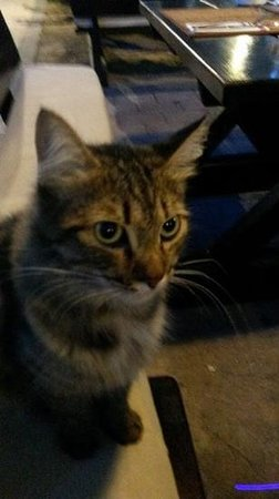 Blue Martini Bistro: resident cat