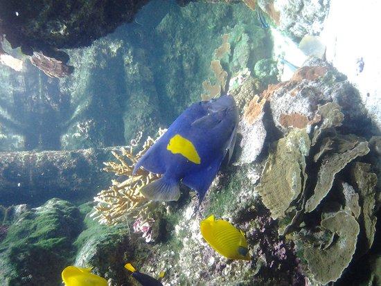 Aquarium La Rochelle : magnifique! !!!