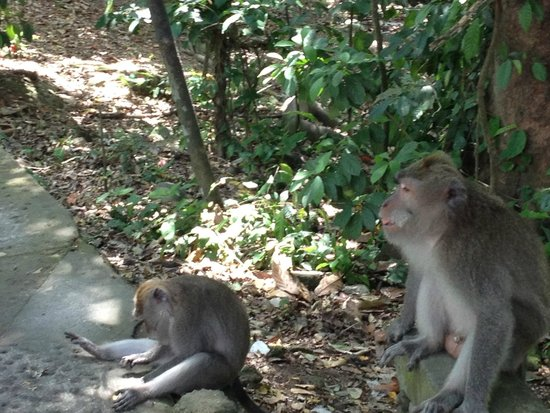 Alam Shanti: Monkeys on walk to Ubud village