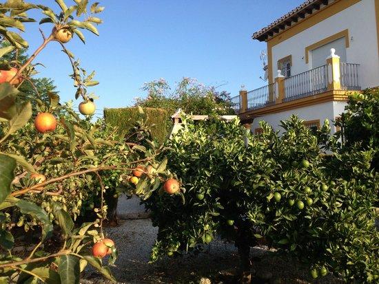 Huerto de frutales photo de casa colina del sol torrox tripadvisor - Del huerto a casa ...