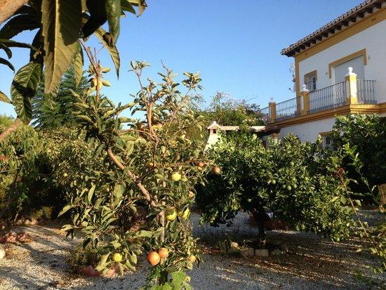 Casa colina del sol torrox spanien omd men och for Hotel con casas colgadas de los arboles