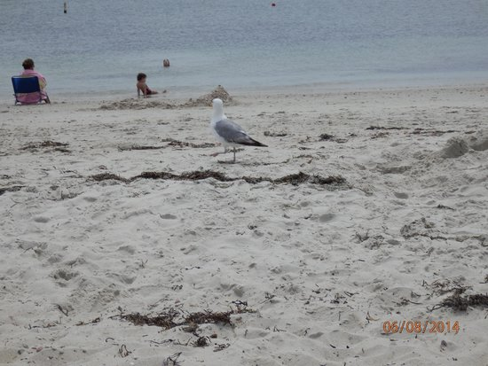 Seagull Beach: More gulls
