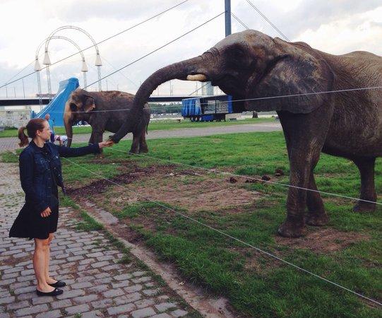Oberkassel: Еды слонам! ;)