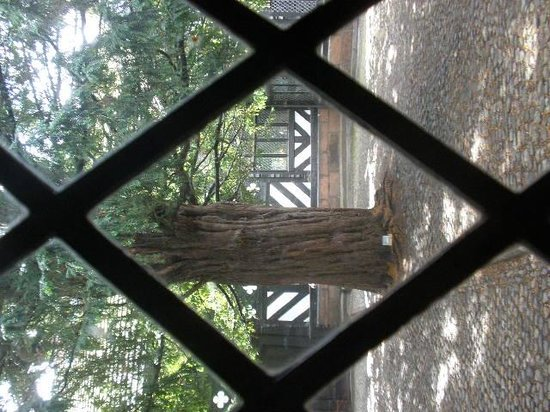 Speke Hall: Aincient yew trees