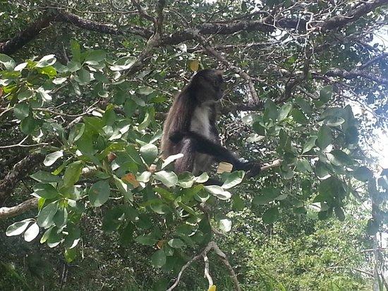 Matachica Resort & Spa: Monkey on trip to Lamanai