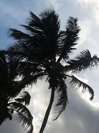 Matachica Resort & Spa: A palm