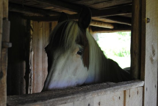 Booker T. Washington National Monument: The horse in the barn