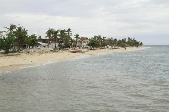 Thresher Shark Divers : Beach scene