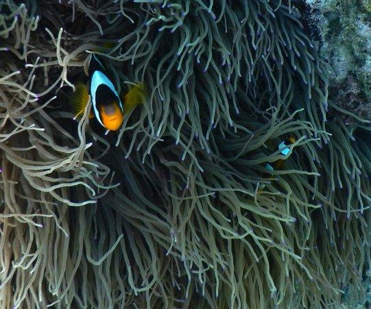 Sanbis Resort: Clown Fish