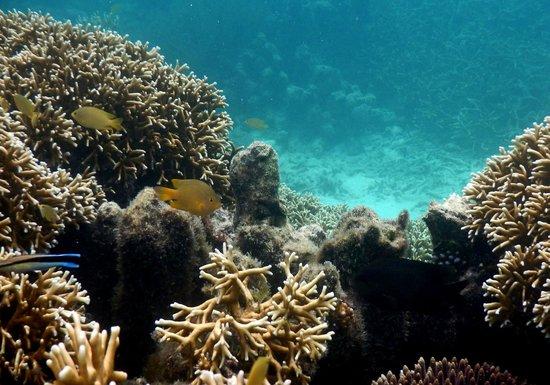 Sanbis Resort: More coral gardens