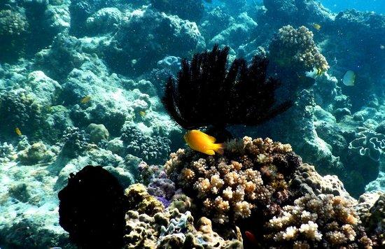 Sanbis Resort : Coral Gardens