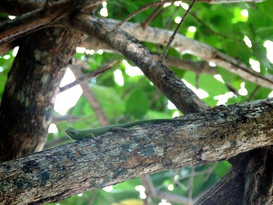 Sanbis Resort : Beautiful Green Lizard
