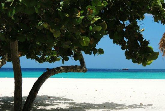 Manchebo Beach Resort & Spa: Manchebo Beach