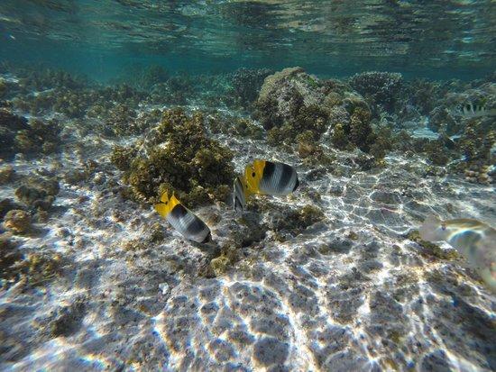 Le Taha'a Island Resort & Spa: Coral Garden