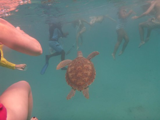 Хоултаун, Барбадос: Excursions catamaran avec tortue