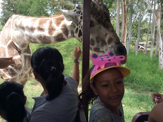 Zoologico Guadalajara: padrisimo..!