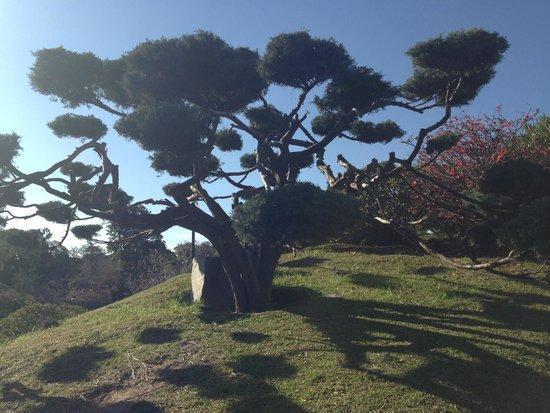 Jardin Japones : Jardín Japonés