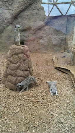 Children's Museum of Indianapolis : The Meerkats