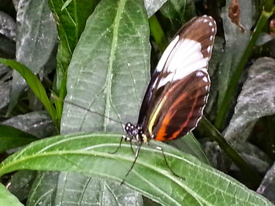 The Original Mackinac Island Butterfly House & Insect World: Butterfly