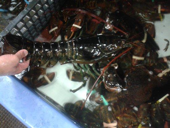 James Hook & Company : vasche di lobsters vive all'interno del locale.