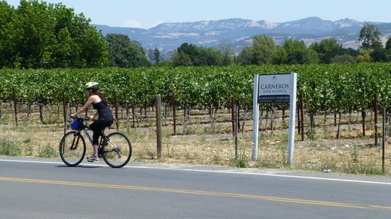 Getaway Adventures/Sonoma On A Bike : Biking