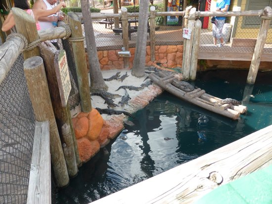 Congo River Golf: feed me please