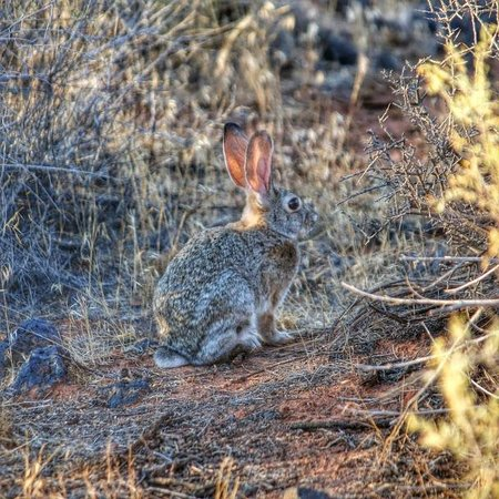 Red Mountain Resort : Wildlife on Inspiration Trail