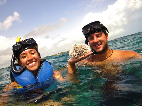 Ocean Adventures Bavaro Splash : Sea Urchin