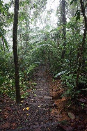 Rio Celeste Hideaway Hotel: Path to Rio Celeste