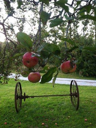 Apples at Apple Knoll Inn