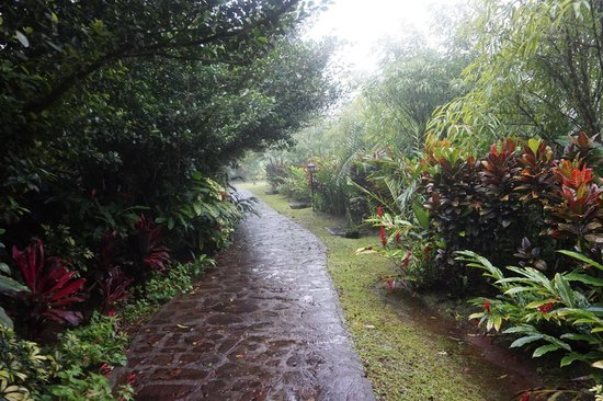 Rio Celeste Hideaway Hotel: Path to bungalow